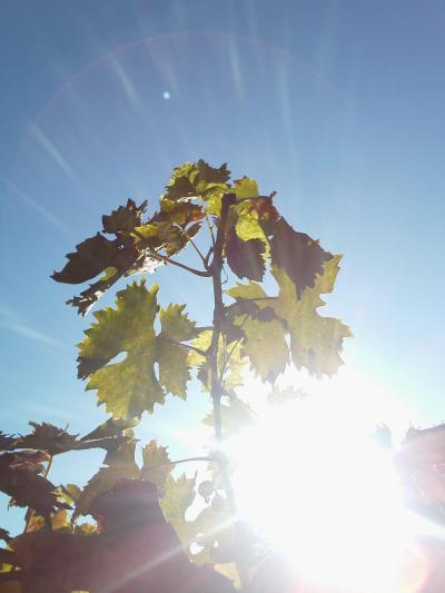 rajska-zahrada-list-slnko